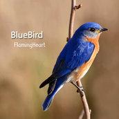 [Hi-Fi] Bluebird(Looking for Bliss..)Ver. M-Blue(32Bit)